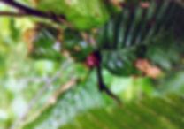 Ladybird_edited.jpg