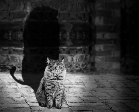 cat-564202_1920.jpg