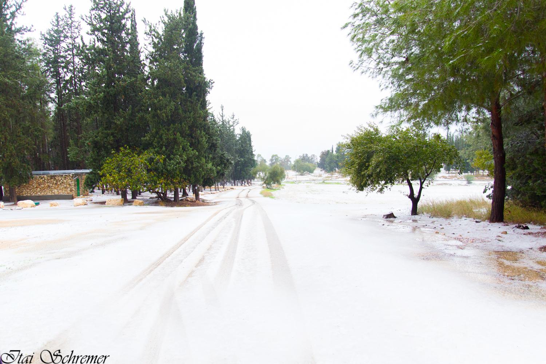 יער בן שמן לבן