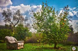 עץ תפוזים מלבלב