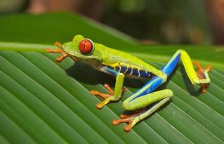 La rana que quería ser una rana auténtica. Augusto Monterroso (Guatemala)