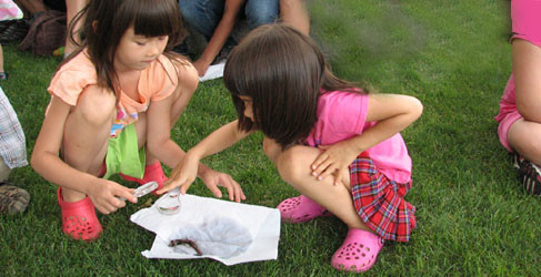 Photos: Earthworms teach young children sensitivity to living things and illustrate the inter-dependency of life.