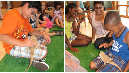 Summer Science Workshop for Children Crickets—Hands On