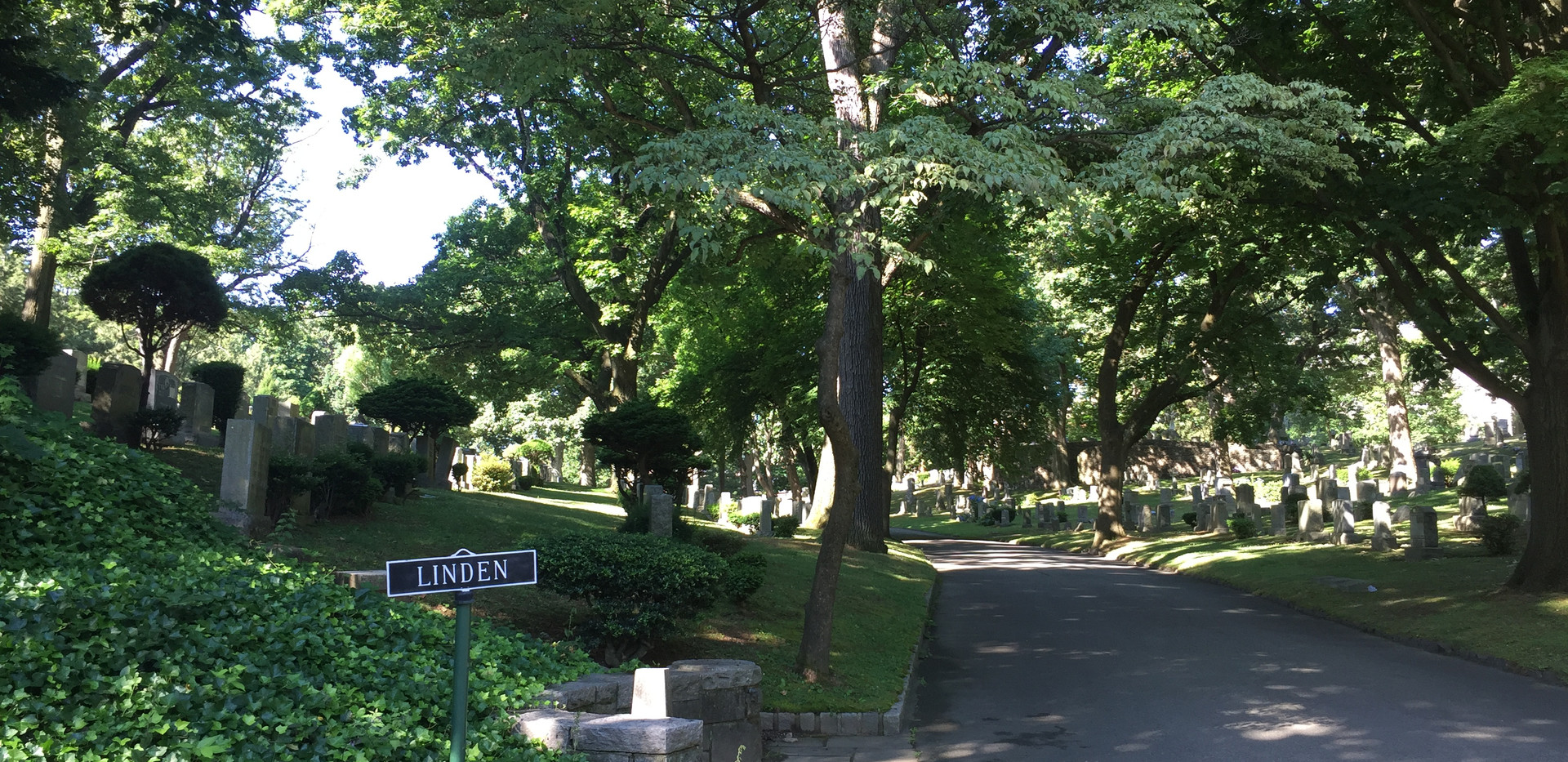 Linden 2.JPG