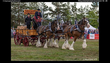 Galcantray Clydesdales.jpg