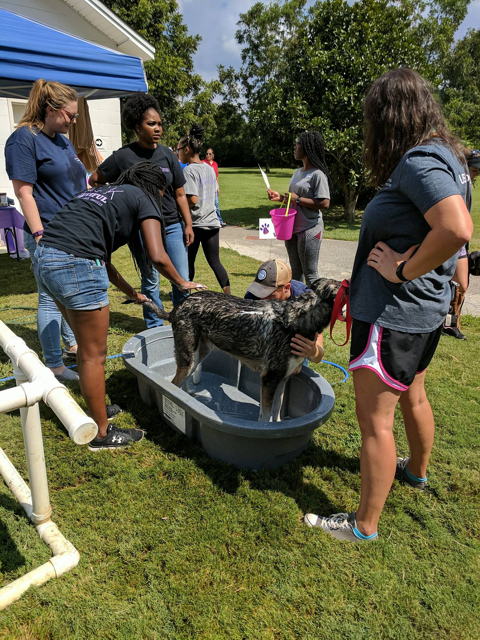 Volunteers washing pups