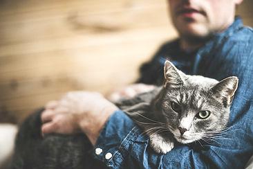 Grey Cat_edited.jpg