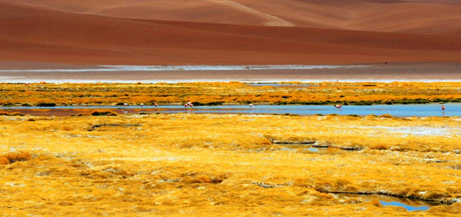 "DAY 168:  ""DESERT LANDSCAPE""  -  2014  Atacama, Chile"