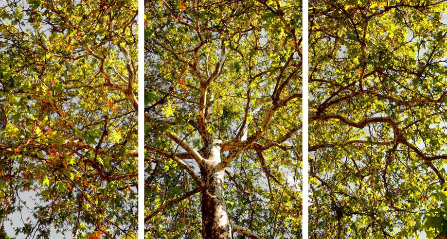 """DAY 69:  """"FLOURISHING TREE""""  -  2013 Napa Valley, USA"""