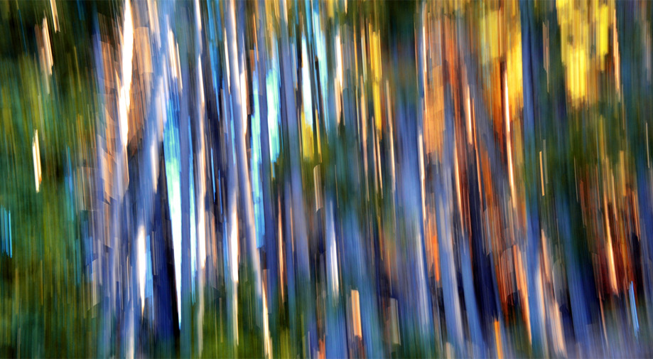 "DAY 4: ""PAINTED FOREST""  -  2015 Bariloche, Argentina"