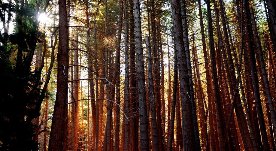 "DAY 147:  ""ENDLESS TREES""  -  2015  Isla Victoria, Argentina"