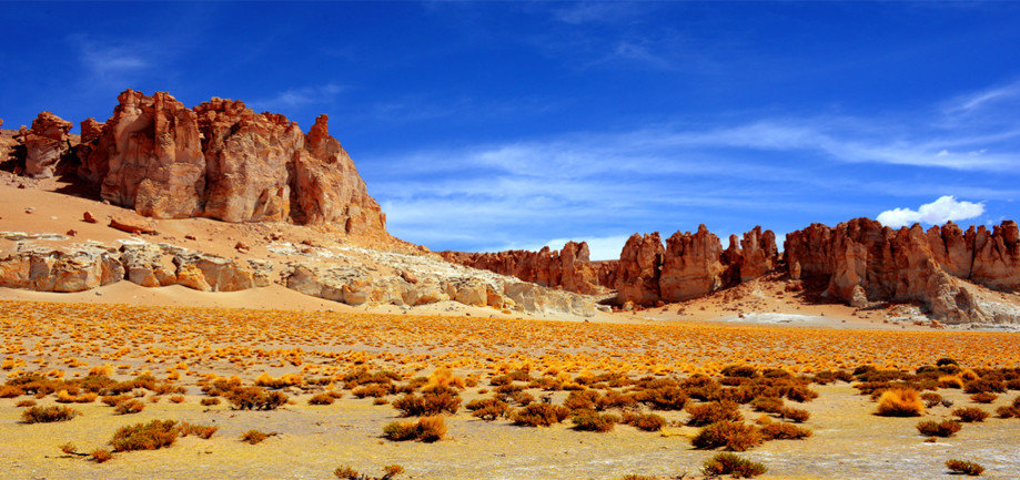 "DAY 72:  ""TARA""  -  2014  Atacama, Chile"