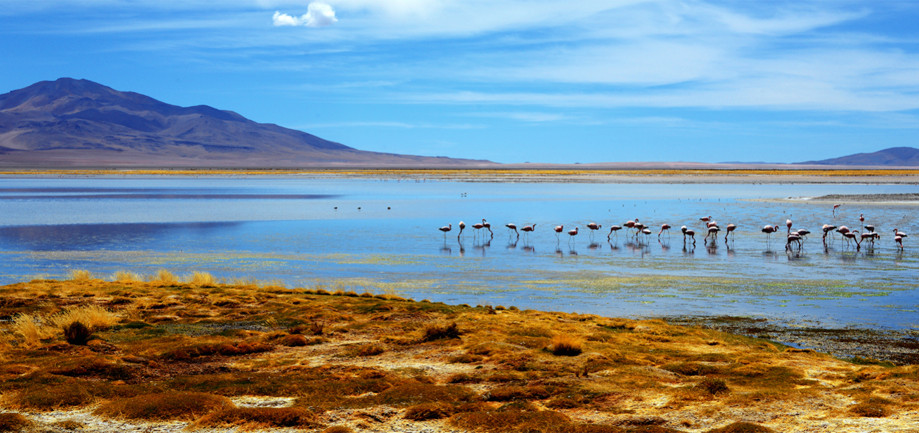 "DAY 176:  ""TARA'S LAGOON""  -  2014  Atacama, Chile"