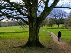Survey Results - Your views on the Earlswood and Redhill Commons
