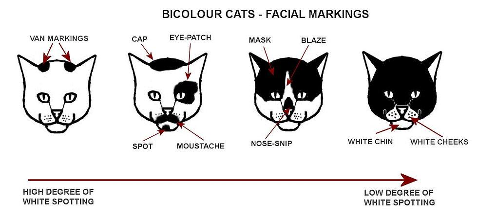 bicolour-faces.jpg
