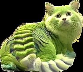 chats toxiques