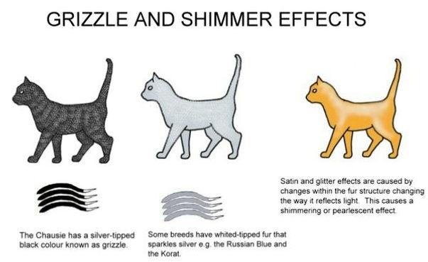 Shimmer-grizzle.jpg