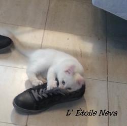 Juubi lance l'attaque chaussure
