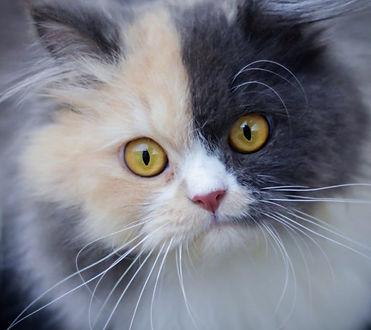couleurs-chat-medium.jpg