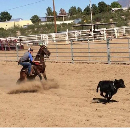 What to Look for in a New Calf Horse