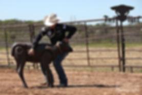 calf roping dummy