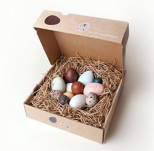 Ein Dutzend Vogeleier in einer Box