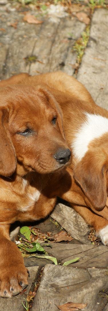 napozó kutyakölykök.jpg