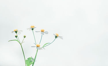 bloom_blossom_chamomile_desktop_backgrou