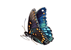 butterfly-1073165.png