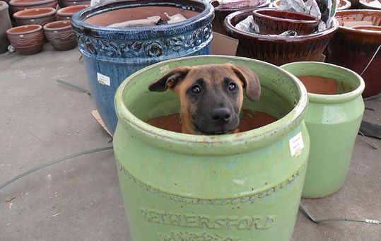 Sam The Store Dog Loves Our Pots!