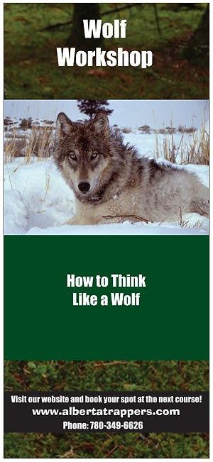 Wolf Front.jpeg