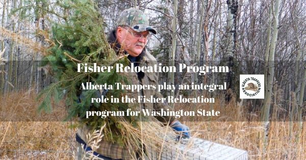 Fisher Relocation Alberta Trappers Assoc