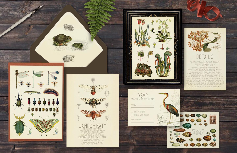 Cabinet of Curiosities Wedding Suite