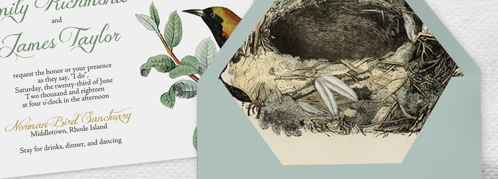 Ornithology Envelope Liner