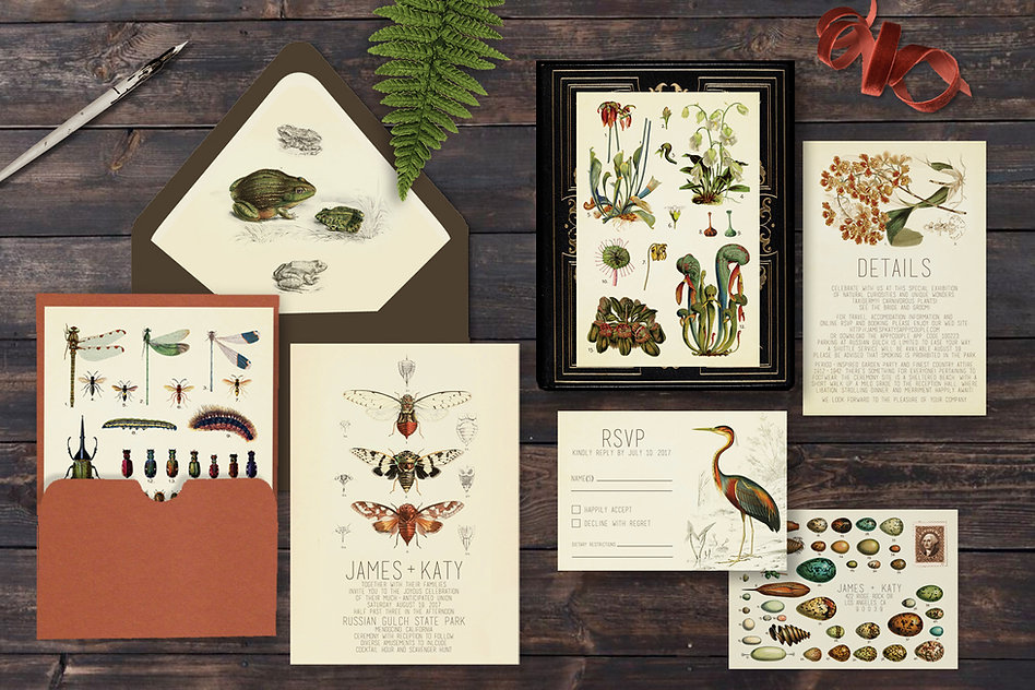 Cabinet of Curiosities Wedding Invitations, frogs, locusts, heron, birds, eggs, orchids, carnivorous plants, instects, dark, moody, custom, bespoke, vintage