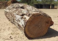 Wood Yard, Cook Wood, Logs, Wood Purchasing, Pecan