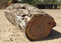 Wood Yard, Cook Wood, Logs, Wood Purchasing, Pecan
