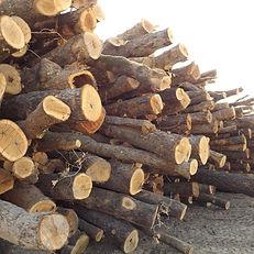 Wood Yard, Cook Wood, Logs