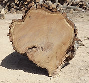Wood Yard, Cook Wood, Logs, Wood Purchasing, Mesquite