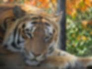 pine groves zoo.jpg
