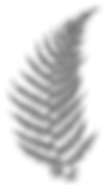 Fern Leaf black and white.png