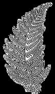 Fern Leaf black and white.png
