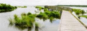 bayou.jpg