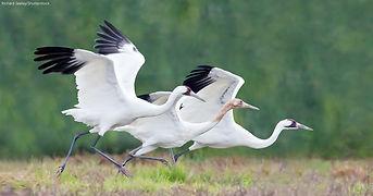 cranes-with-att.jpg