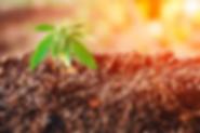 organic-hemp-farming.png