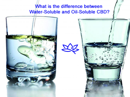 What is the difference between Water-Soluble and Oil-Soluble CBD?