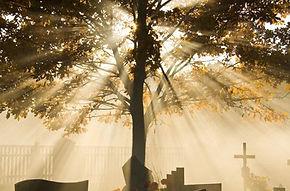 Sunlit tree in cemetery