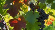 Témoignage : Récit d'une vie de viticultrice...