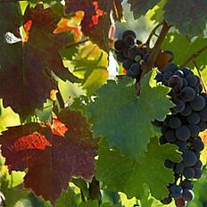 Vine leaves (Dolmades)