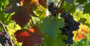 6 modi per goderti al massimo la tua visita alla vineria